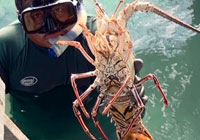 Grand Cayman Lobstering